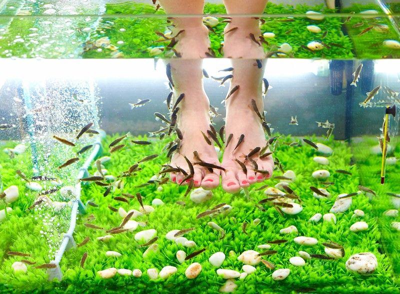 Педикюр рыбками: специальный рыбий фиш-пилинг для ног