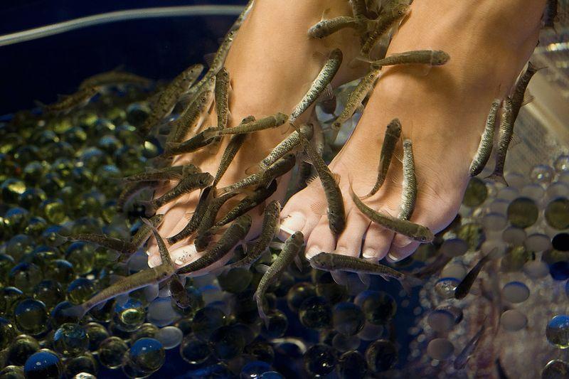 Педикюр рыбками: экологически чистая процедура