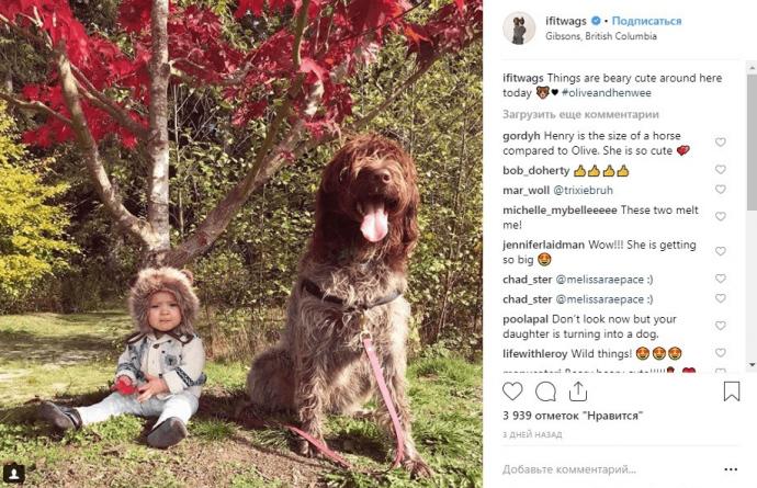 Большая собака с ребенком