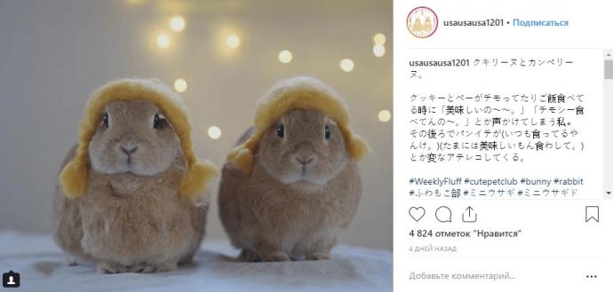 Фото кроликов в Инстаграме