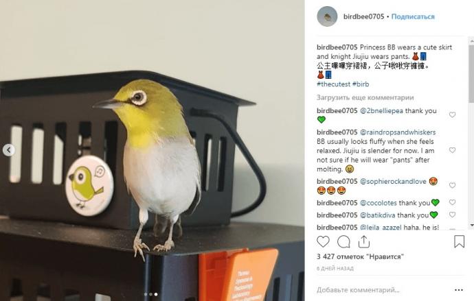 Фото птички Принцессы в Инстаграме