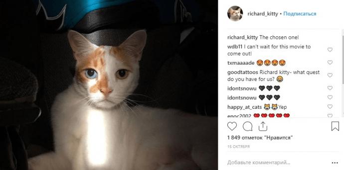 Кот Ричард в Инстаграме