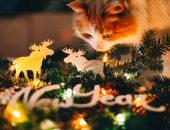 Кошка у новогодней елки