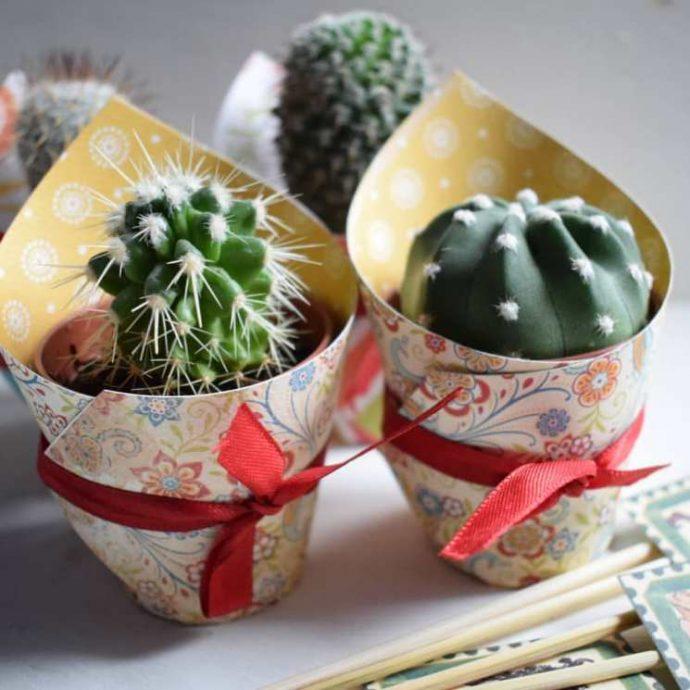 Живые кактусы