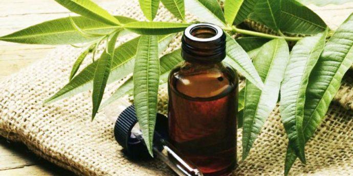 Масло чайного дерева в тёмном флаконе и растение