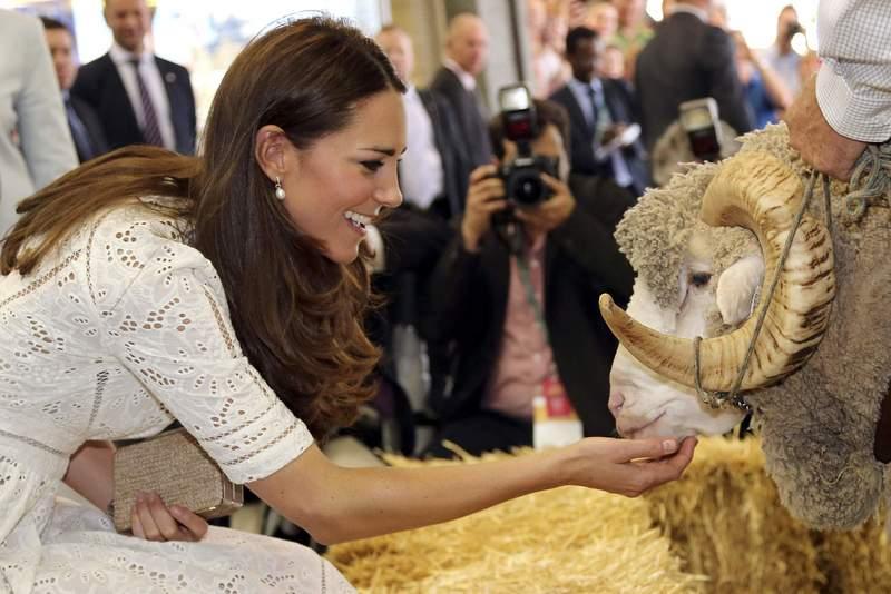 Кейт Миддлтон мастерски стрижёт овец