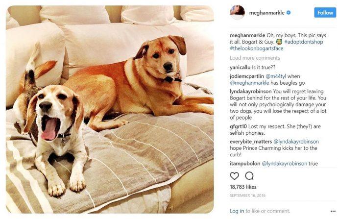 Богарт — пёс Меган Маркл