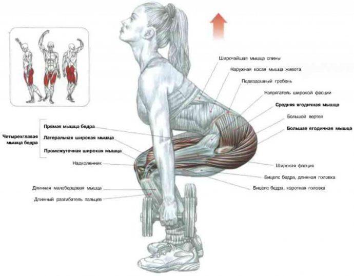 Схема: работа мышц при выполнении приседаний