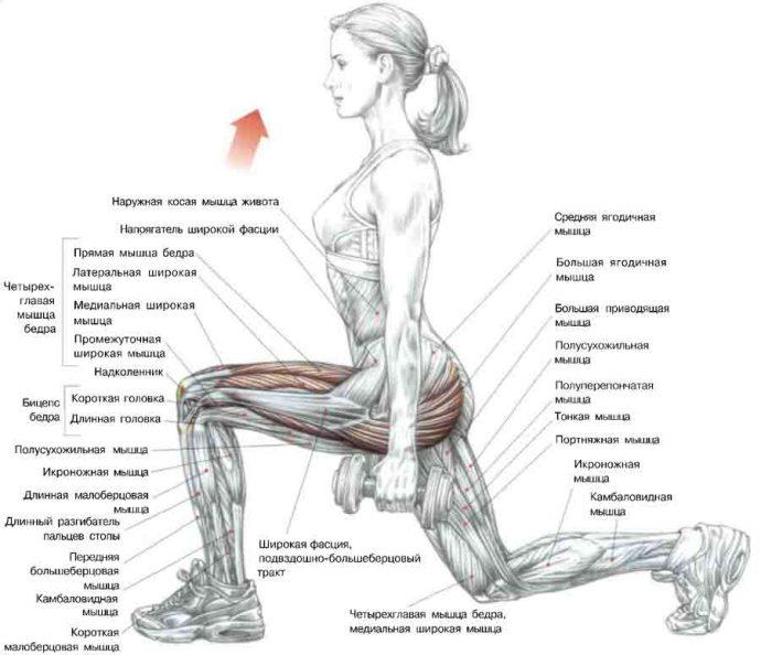 Схема: работа мышц при выполнении упражнения выпады для ягодиц