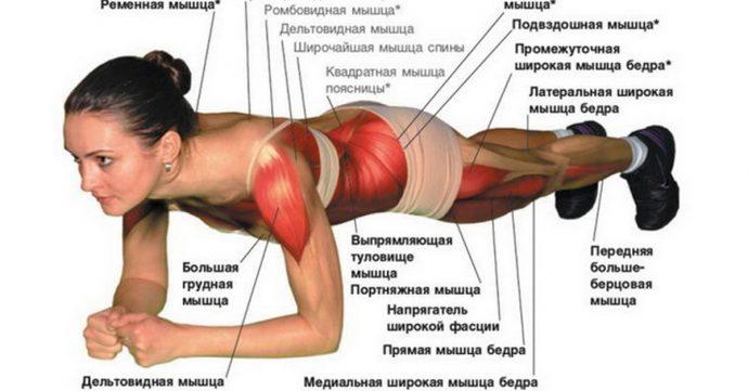 Схема: работа мышц при выполнении планки